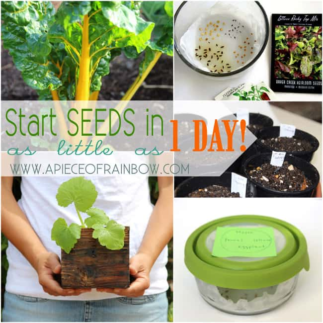 Start seeds fast and easy way