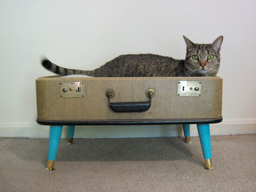 Suitcase kitty bed